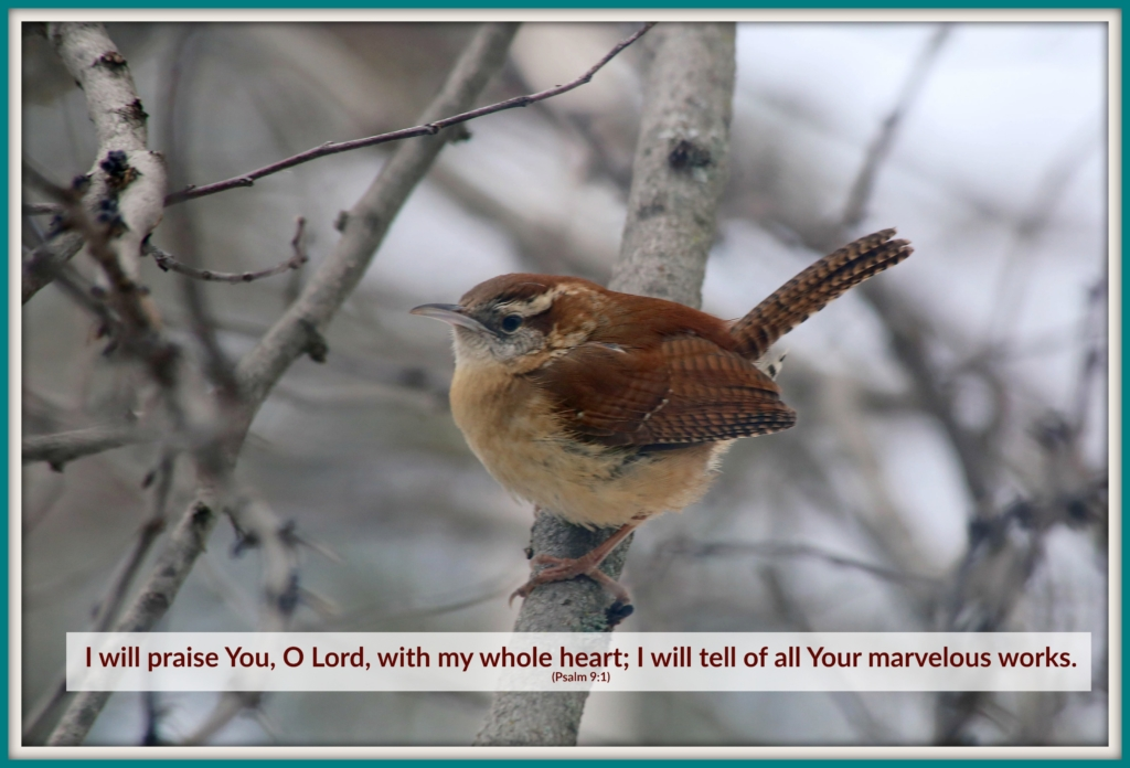 "Carolina Wren - ""I will praise You, O Lord, with my whole heart; I will tell of all Your marvelous works."" (Ps. 9:1)"