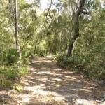 Woods to explore