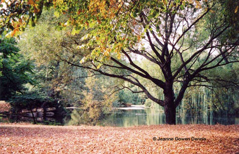 Fall Photo by Jeanne Dennis