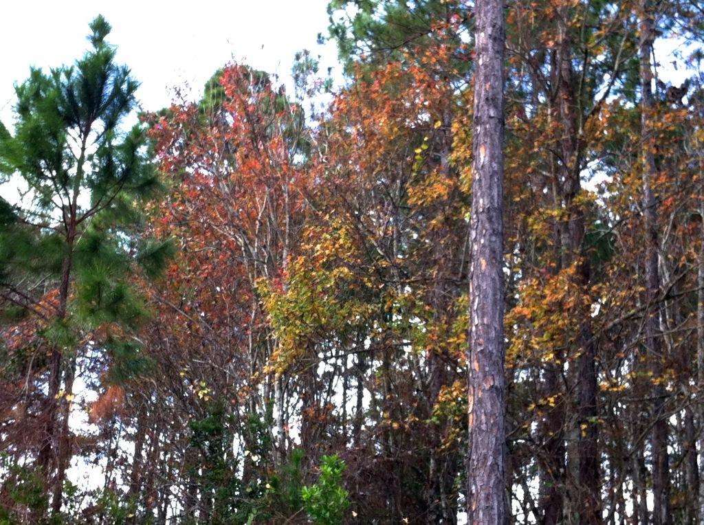 Fall leaves at Christmas
