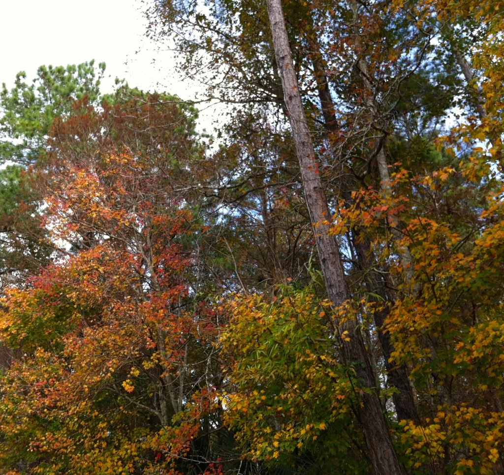 Fall colors in the South 1
