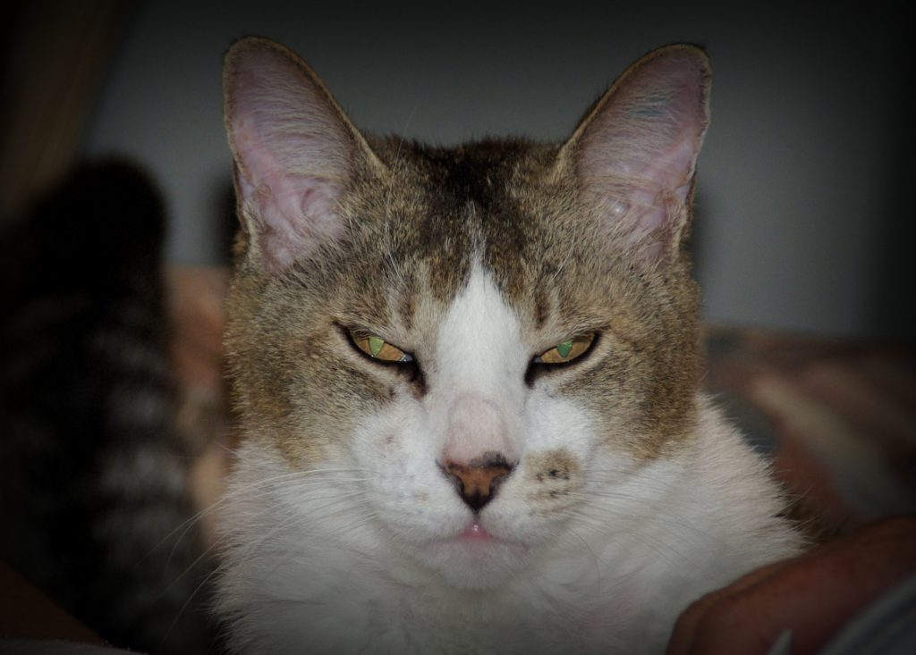 Do things sometimes make you angry? Perturbed cat