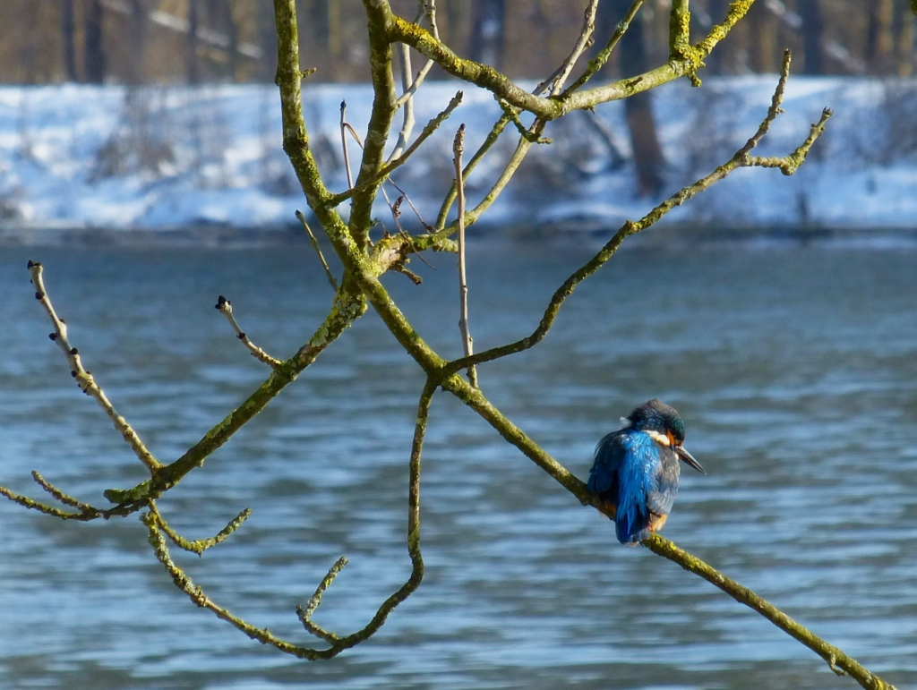 kingfisher near rushing water