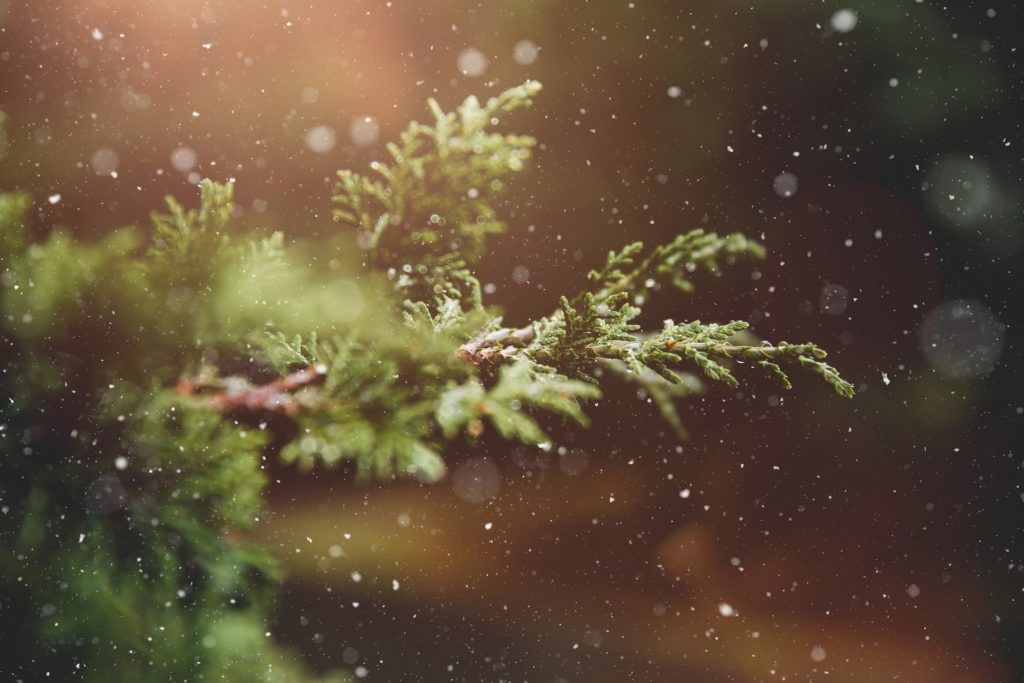 Tree branch in winter