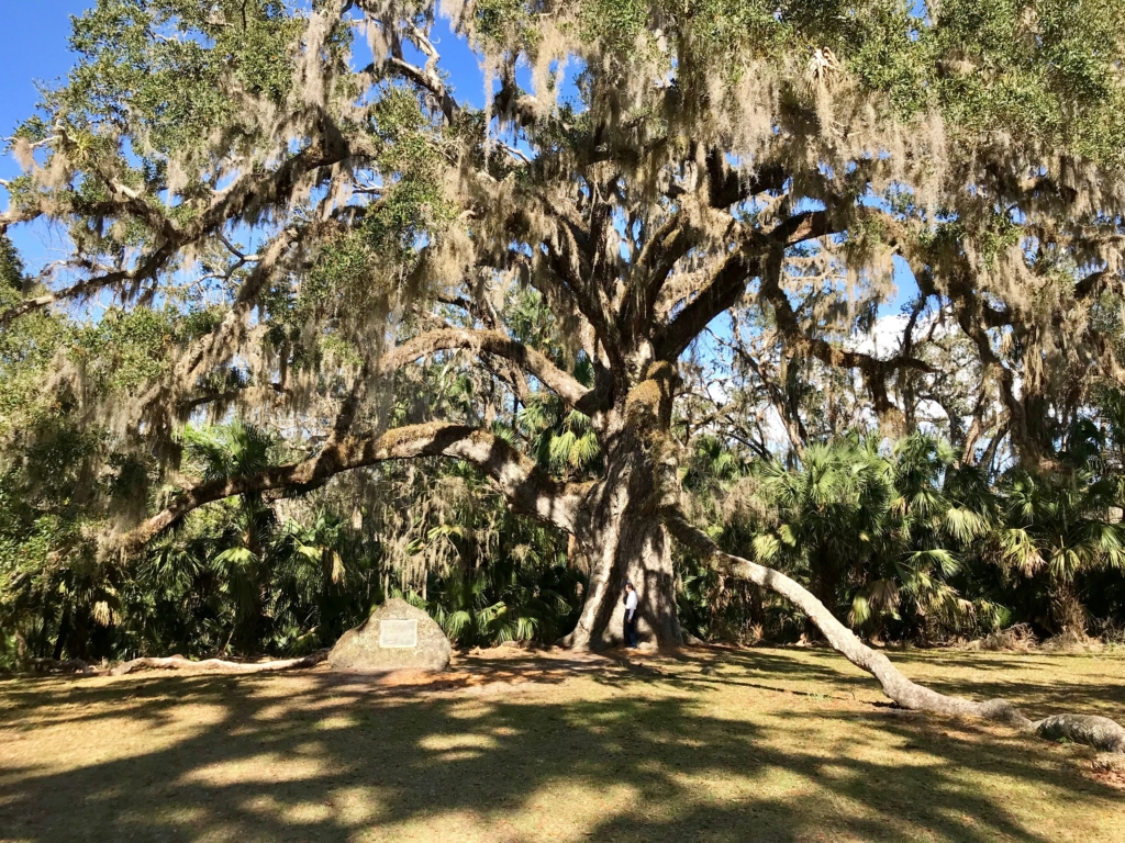 Fairchild Oak, Florida